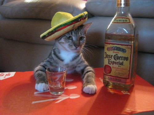 lolcat-cuervo-party-sombrero
